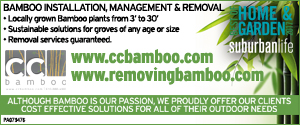 CC Bamboo 12-7-2020